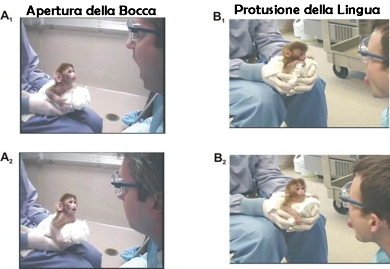La scoperta dei neuroni a specchio il blog della mente - Neuroni a specchio ...